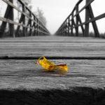 Leaf On Edge Bridge