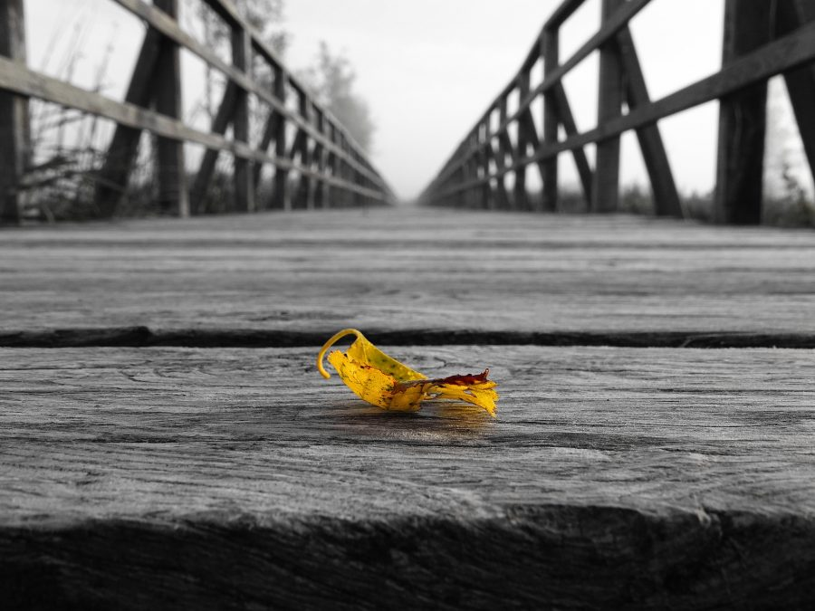 Leaf On Edge Bridge